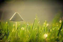 Wonderland.... (Joe Hengel) Tags: wonderland milton miltonde delaware de lsd lowerslowerdelaware mushroom shroom bokeh grass grasses morning morninglight morningdew dew