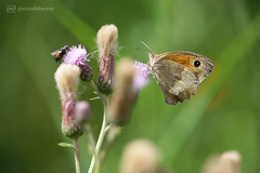 fly & butterfly (photos4dreams) Tags: biking unterwegs photos4dreams p4d photos4dreamz landscape landschaft wald feld forest nature natur canoneos5dmark3 canoneos5dmarkiii flower flowers blume