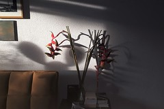 Sunday (heleconia) Tags: sunday apartofme home zuhause heleconie schatten shadow beinghome
