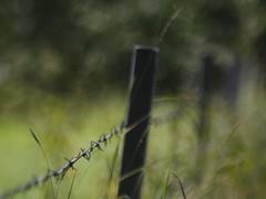 M42 Altglas Bokeh | 21. Juli 2019 | Tarbek - Schleswig-Holstein - Deutschland