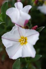 _DSC5873 (Helge Andersen) Tags: blomst hage hagen blomster garden planter