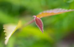 _DSC5861 (Helge Andersen) Tags: blomst hage hagen blomster garden planter