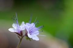 _DSC5851 (Helge Andersen) Tags: blomst hage hagen blomster garden planter