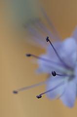 _DSC5848 (Helge Andersen) Tags: blomst hage hagen blomster garden planter