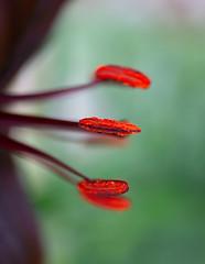 _DSC5836 (Helge Andersen) Tags: blomst hage hagen blomster garden planter