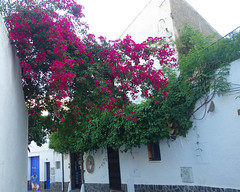 Cadaques (Kaeko) Tags: trip travel vacation holiday town spain catalonia resort cadaques europe street house flower