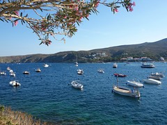 Cadaques (Kaeko) Tags: trip travel vacation holiday town spain catalonia resort cadaques europe ocean flower tree boat