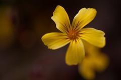 _DSC5910 (Helge Andersen) Tags: blomst hage hagen blomster garden planter