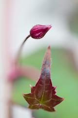 _DSC5894 (Helge Andersen) Tags: blomst hage hagen blomster garden planter