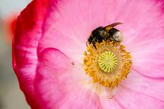 _DSC5885 (Helge Andersen) Tags: blomst hage hagen blomster garden planter
