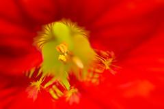 _DSC5866 (Helge Andersen) Tags: blomst hage hagen blomster garden planter