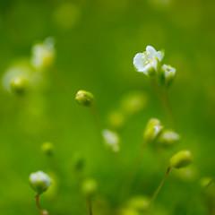 _DSC5858 (Helge Andersen) Tags: blomst hage hagen blomster garden planter