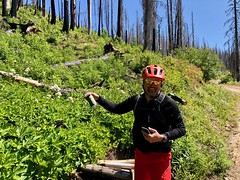 IMG_2763 (Doug Goodenough) Tags: bicycle bike cyle pedals spokes ebike bulls evo estream scott jen river selway idaho lookout mountain climb sun summer july 2019 gravel grinding drg531 drg53119 drg53119p drg53119pindianlookout forest canyon