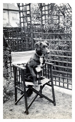 VINTAGE DOG BUSTER (JOHN MORGANs OLD PHOTOS.) Tags: vintage found photo different dog interesting unusual unknown unique bw black and white vintagephoto