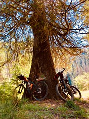 IMG_2745 (Doug Goodenough) Tags: bicycle bike cyle pedals spokes ebike bulls evo estream scott jen river selway idaho lookout mountain climb sun summer july 2019 gravel grinding drg531 drg53119 drg53119p drg53119pindianlookout forest canyon