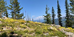 IMG_2761 (Doug Goodenough) Tags: bicycle bike cyle pedals spokes ebike bulls evo estream scott jen river selway idaho lookout mountain climb sun summer july 2019 gravel grinding drg531 drg53119 drg53119p drg53119pindianlookout forest canyon