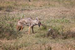 (Markus Hill) Tags: africa travel canon tanzania safari ngorongoro crater arusha tansania 2019
