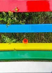 Rood zijn de halmen... (CloudBuster) Tags: rood blauw geel groen wit flag island terschelling bankje poppy klaproos nature natuur