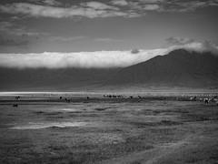 NGORONGORO LANDSCAPE (eliewolfphotography) Tags: africa tanzania ngorongoro africananimals landscapes africanlandscapes bnw blackandwhite blakandwhitelandscapes safari wildlife nature naturephotographer