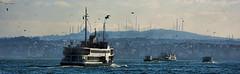 Estambul y el Bosforo (Miradortigre) Tags: turkey bosforo estambul istambul asia europa canal mar channel sea boat barco seagull gaviotas city ciudad puerto port harbour bosphorus turquia