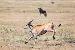 (Markus Hill) Tags: arusha tansania canon 2019 africa travel tanzania ngorongoro crater animal wildlife nature