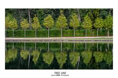 Tree line (Ignacio Ferre) Tags: trees árboles lagranjadesanildefonso lagranja realsitiodelagranjadesanildefonso sanildefonso segovia comunidaddecastillayleón españa spain jardín garden verde green nikon reflejo reflection ngc
