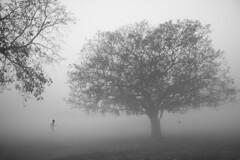 AN AMAZING MORNING (Arunabha Kundu) Tags: ngc travel nature people fog winter morning ambiance bird tree serenity blackandwhite