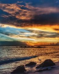 Florida dreams (DonMiller_ToGo) Tags: seascape nature naturelovers d810 gulfofmexico sunset sunsetsniper caspersenbeach birds silhouettes water sky skycandy skypainter