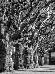 Trees (stephenbryan825) Tags: january liverpool merseyside stgeorgesgardens stgeorgeshall winter bark branches gardens grass shadows stronglight texture trees