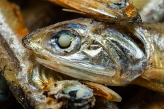 dried anchoy, 2x (jlodder) Tags: macromondays gonefishing dried anchovies anchovy eye mpe65mmf2815xmacrophoto