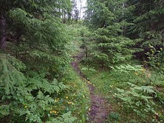 Steep trail (mtbboy1993) Tags: steep trail askim foss norway norge sti skog forest grass fallentrees trees sonycameraapp flowers