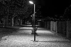 A summer night (lebre.jaime) Tags: portugal beira covilhã publicgarden nocturnal nightphotography tree bench leaves digital ff fullframe fx blackwhite bw noiretblanc pretobranco pb ptbw nikon d600 voigtländer nokton 58f14sliis nokton5814sliis affinity affinityphoto