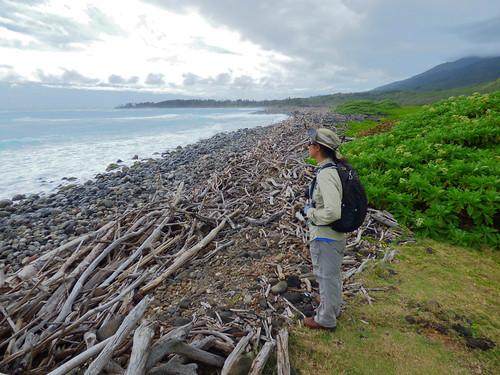 Surveying for Naio Thrips - Waihee, Maui