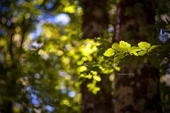 Natura III (iSalv) Tags: canon eos 1dmarkiii italia italy basilicata lucania viggiano sacromonte lightroom ps helios 58mm f2 adapter eostom42 pdc maf dof color colori natura nature bosco imac