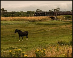 'It's behind you' (peterdouglas1) Tags: lms lmssteamtrains jubileeclass 5xp 45690 leander horse rhosneigr anglesey northwalescoastrailway