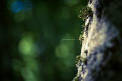 Natura IV (iSalv) Tags: canon eos 1dmarkiii italia italy basilicata lucania viggiano sacromonte lightroom ps helios 58mm f2 adapter eostom42 pdc maf dof color colori natura nature bosco imac