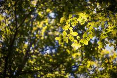 Natura I (iSalv) Tags: canon eos 1dmarkiii italia italy basilicata lucania viggiano sacromonte lightroom ps helios 58mm f2 adapter eostom42 pdc maf dof color colori natura nature bosco imac