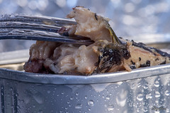 Gone Fishing. (Digifred.nl) Tags: macromondays gonefishing digifred 2019 nederland netherlands pentaxk5 hmm macro macrophotography closeup vis visinblik sardine sardientjes