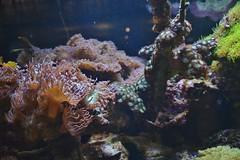 Aquarium, Royal Ontario Museum, Toronto, ON (Snuffy) Tags: aquarium royalontariomuseum rom toronto ontario canada