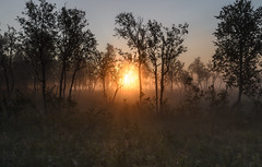 Morning mist (B_Olsen) Tags: sunrise mist forest nikonz6 senja troms norway landscape nature