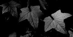 Leaves (Peter_Cameron) Tags: fujixe3 fujinonxc50230mmf4567