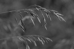 Grass (Peter_Cameron) Tags: fujixe3 fujinonxc50230mmf4567