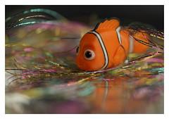 Fishy Fish (VanveenJF) Tags: macromondays gonefishing mm hmm macro fish fishy sony bokina alberta canada nemo meal food orange