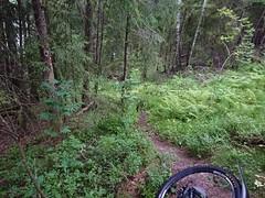 Looking down the trail (mtbboy1993) Tags: foss askim indreøstfold østfold norway norge trail forest skog sti singletrack