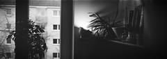 xpan / Foma 400 (daysonjupiter) Tags: xpan xpan45mm hasselbladxpan tx1 panorama panoramic bw bwfilm film filmisnotdead filmphotography filmphoto 35mm 35mmphotography 35mmphoto 35mmfilm 35mmanalog analog analogue analogphotography analogfilm analogphoto fomapan400 foma stilleben