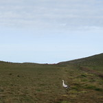 Falkland Islands thumbnail