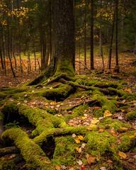 Maine Fall 2014 (willsdad48) Tags: acadianationalpark maine newengland autumn fallcolors fallfoliage landscape seascape seacoast sunrise nature hiking nikon nikonusa nikond800 travel travelphotography