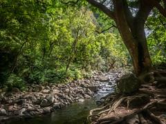 Quiet Kinihapai (Bug In Box) Tags: stream tropical vacation island landscape nature hawaii maui kinihapai tree roots jungle foliage rocks day sun