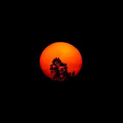 (Noel F.) Tags: sun sol sunrise mencer sony a7r iii a7riii fe 100400 gm tc 14x galiza galicia