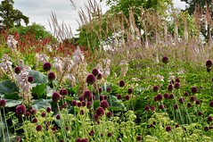 Floral Labyrinth colours (stephen_chipp) Tags: florallabyrinth trenthamgardens colour summer flowers allium hostas
